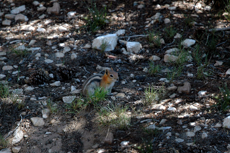 This chipmunk and a few others were at the start of the trail.