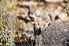 Antelope_Squirrel_Flowers_Desert_Photo_Retreat_IMG_0155