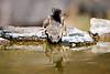 Antelope_Squirrel_Desert_Photo_Retreat_IMG_0099