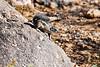 Antelope_Squirrel_Desert_Photo_Retreat_IMG_0094
