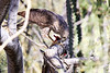 Sharp_Shinned_Hawk_Desert_Photo_Retreat_IMG_0011