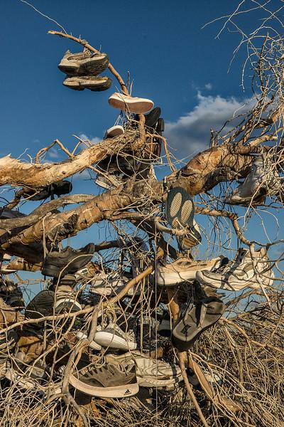 The fallen Shoe Tree.