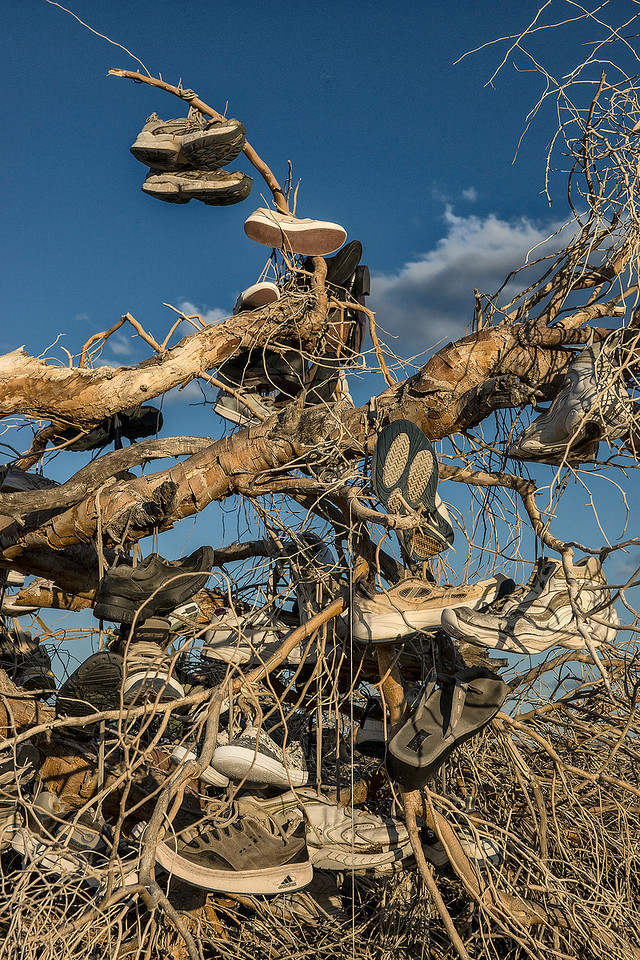 The fallen Shoe Tree.