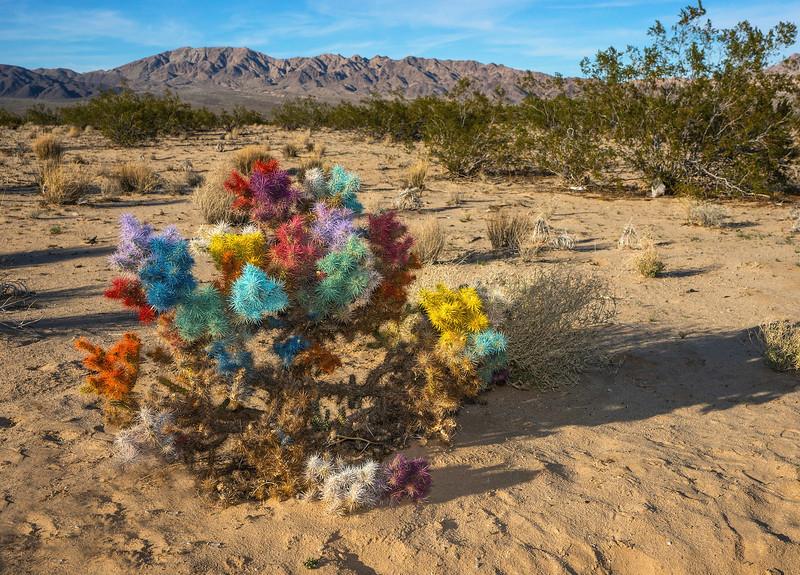 Painted Cholla Cactus, Amboy Road, Wonder Valley, California.