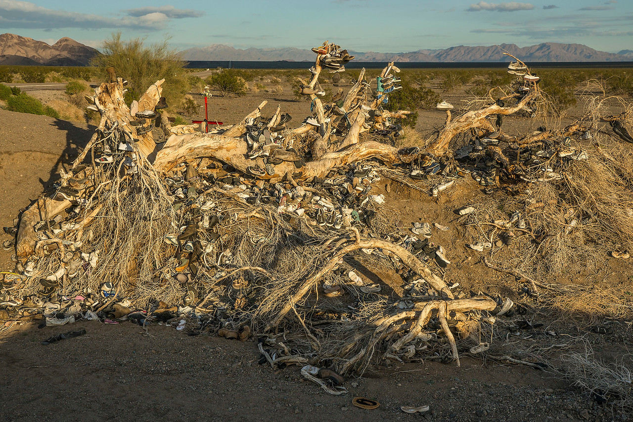 RIP:  The Amboy Shoe Tree.