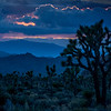 Deep Blue Joshua Tree