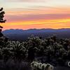 Cholla Sunrise Joshua Tree National Park