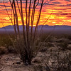 Cottonwood Sunset Joshua Tree