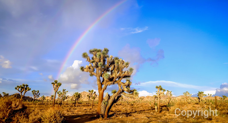 Joshua Tree National Park Rainbow