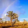 Joshua Tree National Park Rainbow