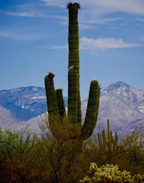 Tucson Icon