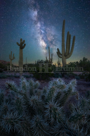 Sonoran Dreams
