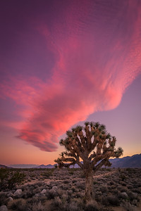 Joshua Tree and Wave Cloud