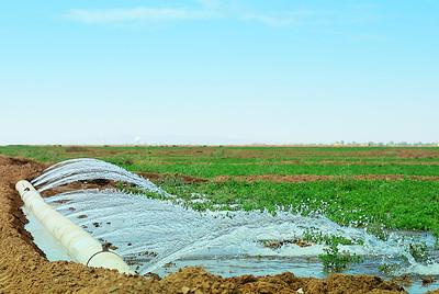 irrigating an alfalfa field.