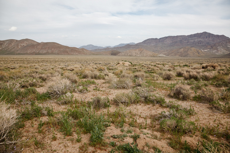Looking across Butte Valley toward Willow Spring at the west end of the valley