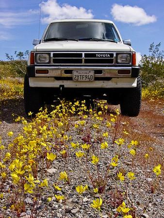 Death Valley Wildflowers - March 2005