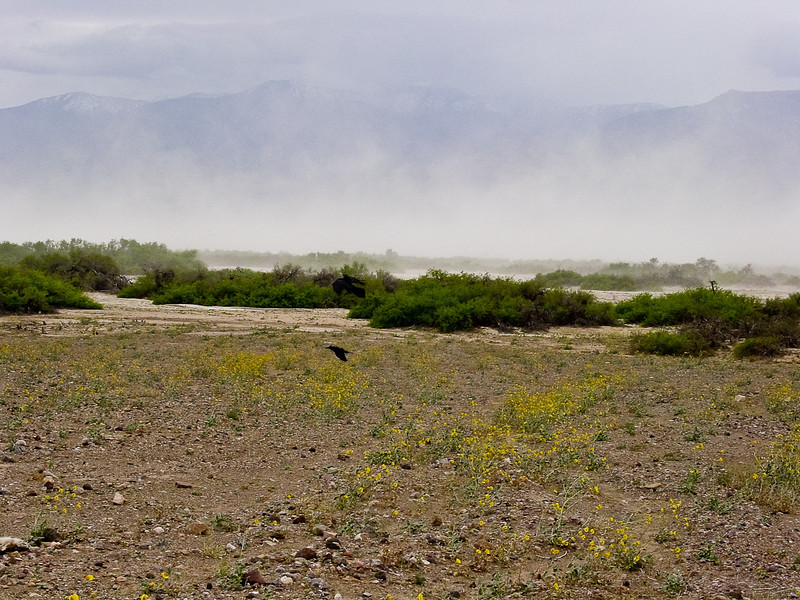 Dust Storm!<br /> <br /> (not the hapless crows trying not to get blow away)