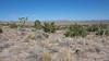 View across Lanfair Valley to Piute Range
