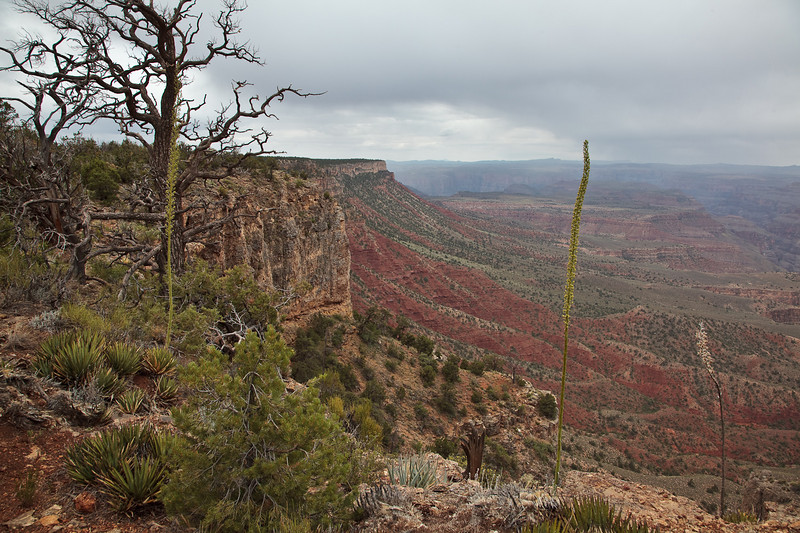 Rain squalls filled the entire canyon