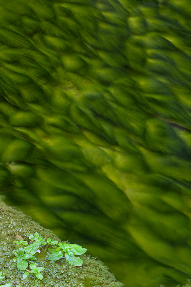 Moss Abstract 2, Pinto Creek