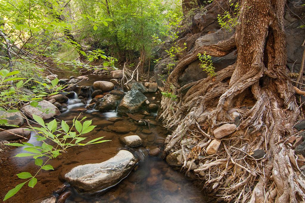 Coon Creek, Salt River Canyon Wilderness