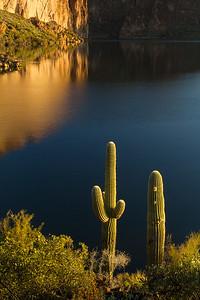 Morning Light on Saguaros, Canyon Lake
