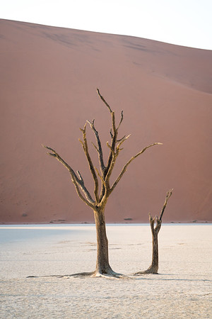 Fascinating and eerie dead trees in Deadvlei, Namibia, at sunrise.