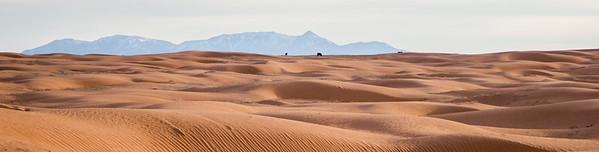 Desert Cows