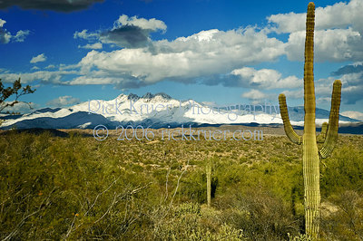 Arizona snow on the Four Peaks Mountains northeast of Mesa, AZ (ND70_2006-03-12DSC_3065-FourPeaksSnowSaguaro-nice-4.psd)