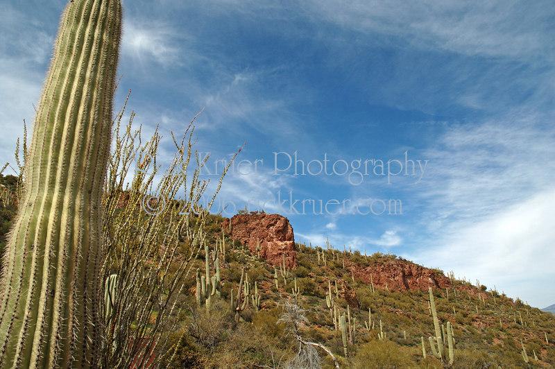 Saguaros in Tonto Nat'l Monument (ND70_2005-03-04DSC_0759-SaguaroTontoNatlMon-2.jpg)