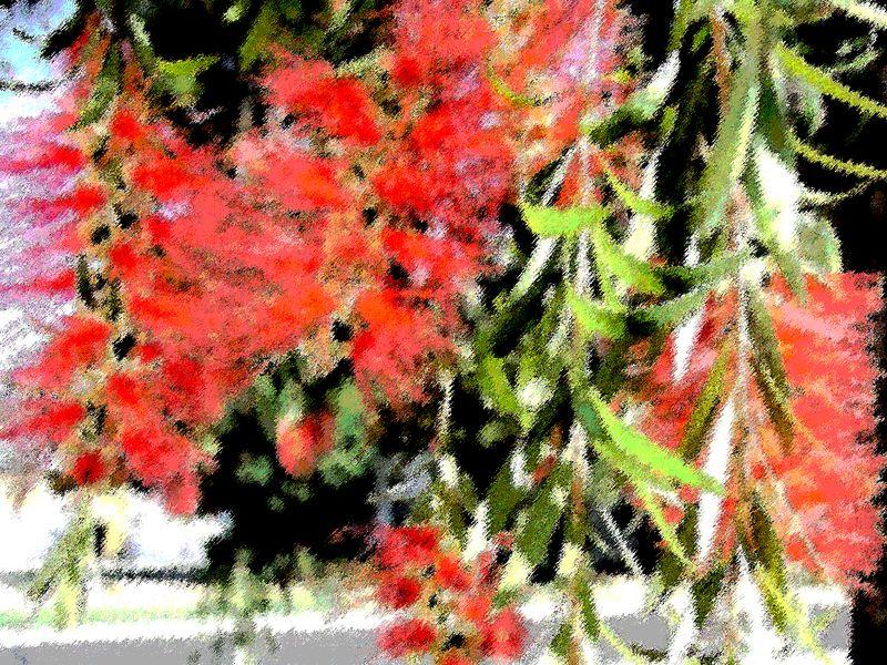 Arizona Bottlebrush Tree in spring SpecialEffects (P3272317-AZSpring-BottlebrushTree-SpecialEffects.jpg)