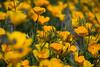 D200_20100313_1509_DSC_3415-WildflowersCloseup-nice-2