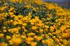 D200_20100313_1509_DSC_3416-WildflowersWide-nice-2