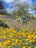 P3092657-WildflowersTallJPG