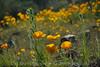 D200_2008-03-09DSC_5342-WildflowersCloseupWide-nice