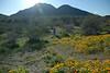 D200_2008-03-09DSC_5313-EileenPhotosWildflowers-nice