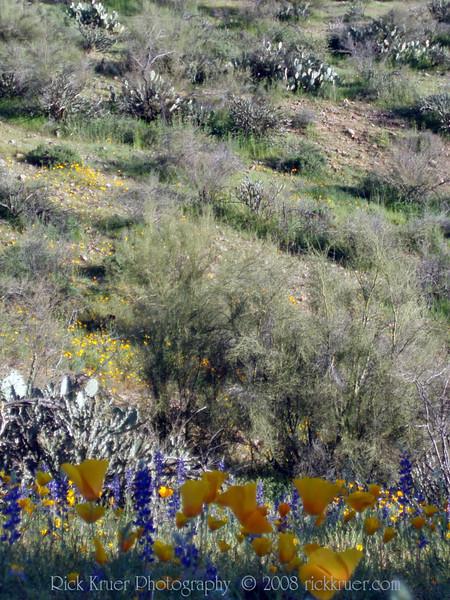 P3092673-WildflowersTall-niceJPG