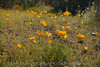D200_2008-03-09DSC_5336-WildflowersCloseup-nice