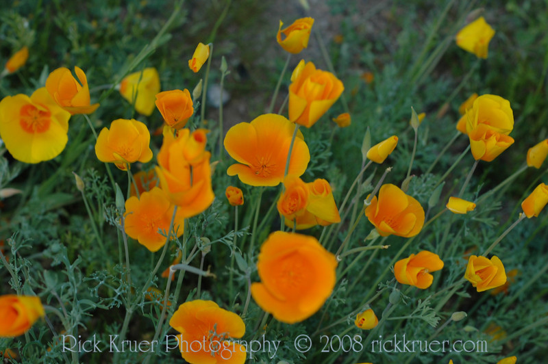 ND70_2008-03-09DSC_7597-WildflowersClosingSunset-nice