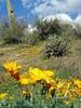 P3092659-WildflowersFarJPG