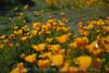 D200_2008-03-09DSC_5304-WildflowersWide-nice