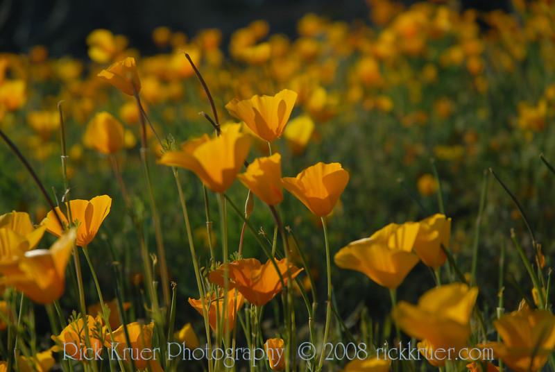 D200_2008-03-09DSC_5373-WildflowersCloseup-nice