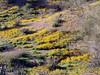 P3092698-WildflowersWideJPG