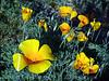 P3092663-WildflowersCloseup-niceJPG