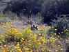 P3092693-FlowersCactusJPG