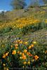 D200_2008-03-09DSC_5290-WildflowersDesertSaguaroTall-nice