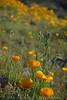 D200_2008-03-09DSC_5341-WildflowersCloseupTall-nice