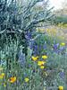 P3092711-WildflowersCactus-niceJPG