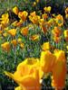 P3092705-WildflowersCloseupTall-niceJPG