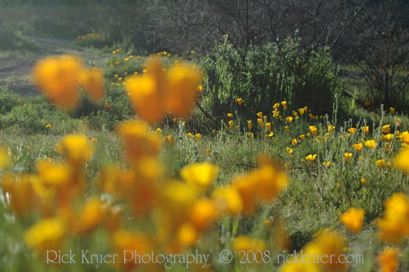 ND70_2008-03-09DSC_7590-WildflowersDOF-Far-nice